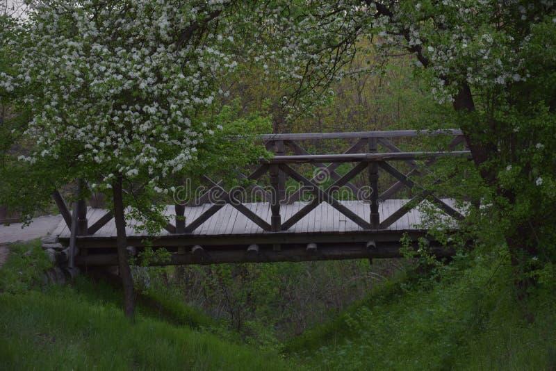 Holzbrücke in der Natur stockfotos