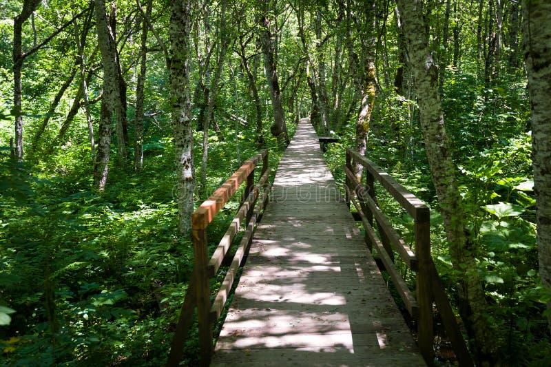 Holzbrücke durch den Sumpf in einem Wald stockfotos
