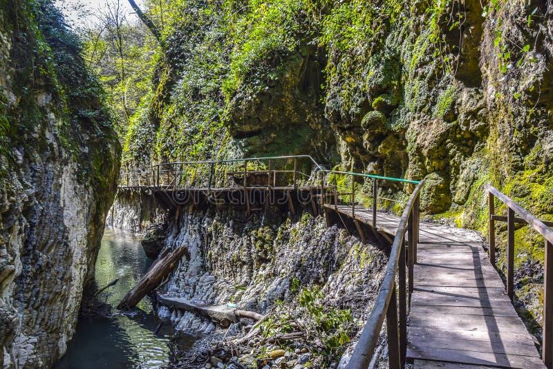Holzbrücke entlang der Klippe in der Dschungelsteinschlucht lizenzfreies stockbild
