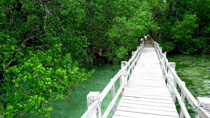 Holzbrücke im Dschungel auf Camiguin-Insel stockfotos