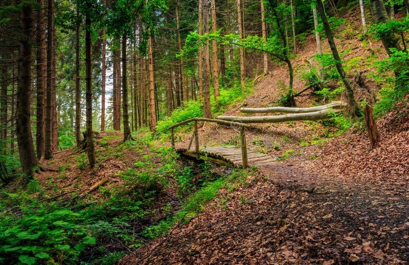 Holzbrücke im Kiefernwald stockbilder