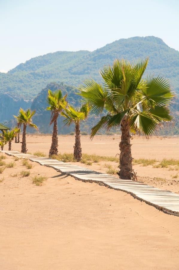 Holzbrücke- und Palmen auf der sandigen Küste lizenzfreie stockbilder