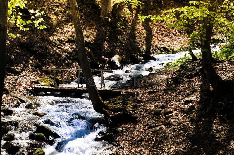 Holzbrücke und schneller Gebirgsfluss im Schatten eines Baums, Reisekonzept im wilden, kopieren Raum stockfotografie
