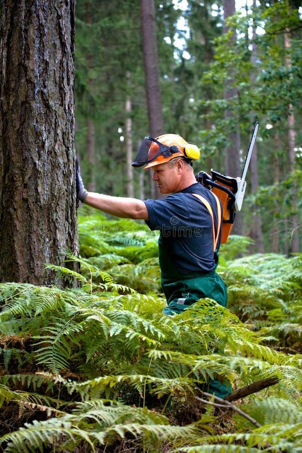 Holzfäller lizenzfreie stockfotos