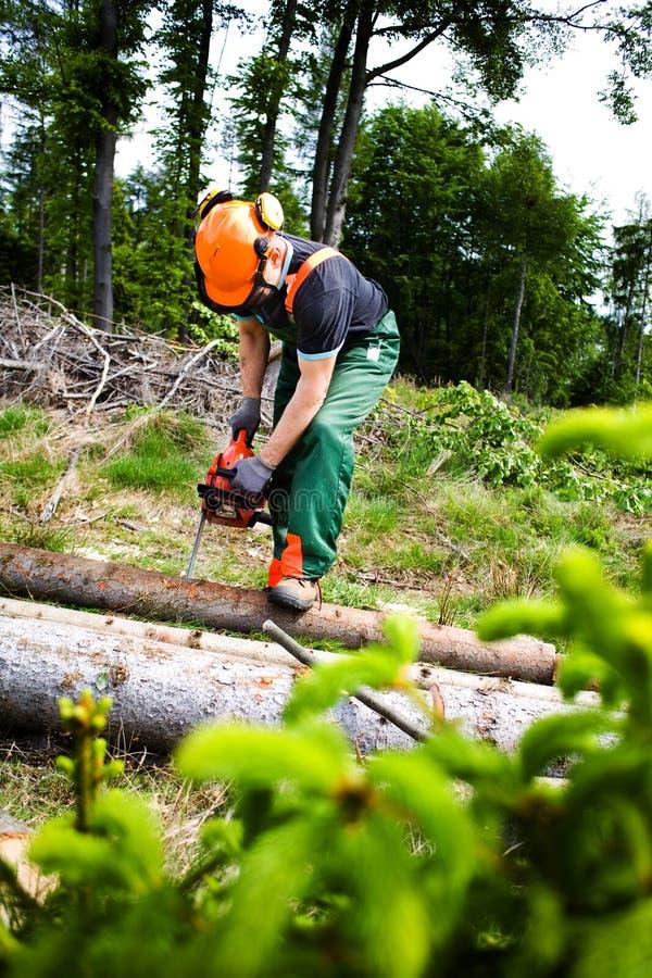 Holzfäller stockfotos