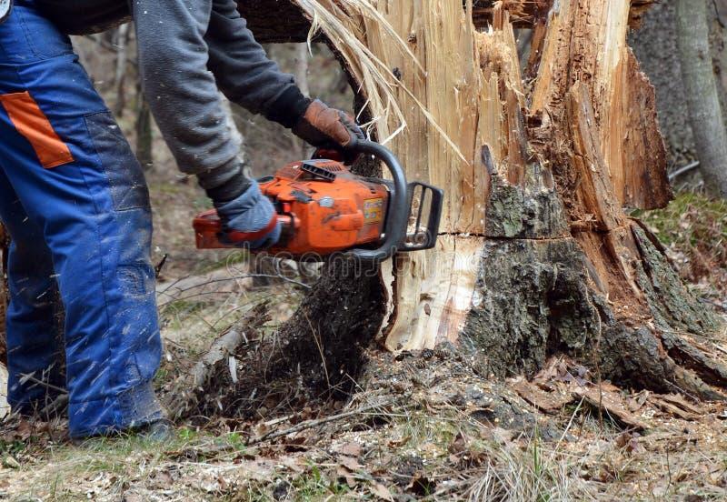 Holzfäller, der gebrochenen Baum schneidet lizenzfreie stockbilder