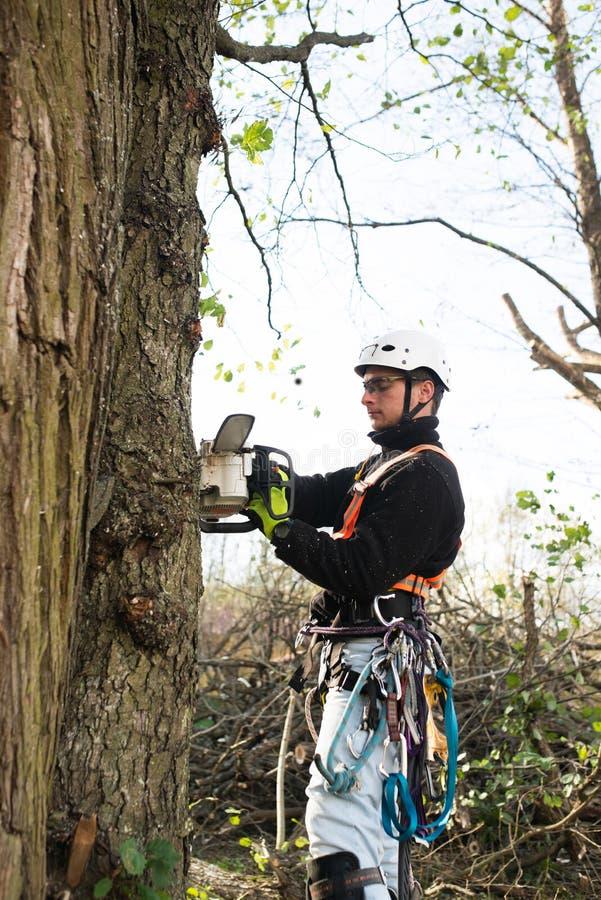 Holzfäller mit Kettensägen- und Geschirrbeschneidung ein Baum stockbild