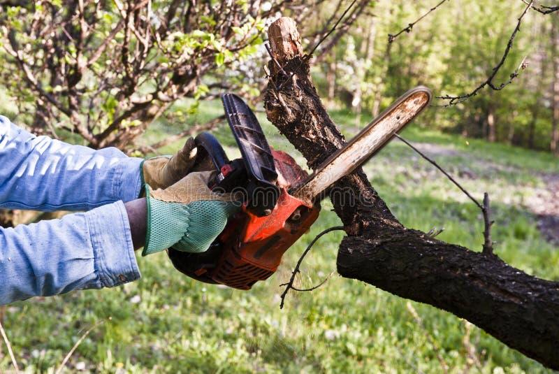 Holzfällerbeschneidung mit einer Kettensäge lizenzfreie stockfotografie