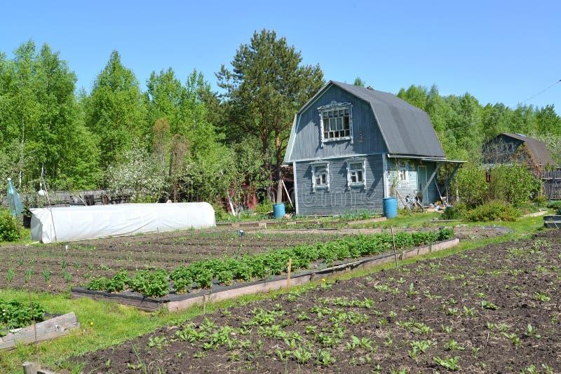 Holzhaus am Saisonnachmittag der datscha im Frühjahr lizenzfreie stockfotos