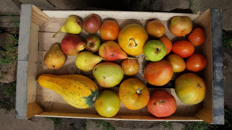 Holzkiste mit reifen organischen Obst und Gemüse stockfotografie