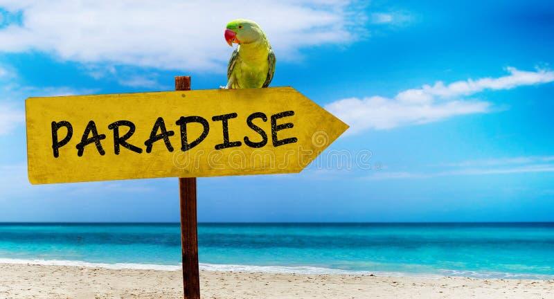 Holzschild auf schönem Strand und klarem Seeesprittextparadies Ein grüner Papagei sitzt auf einem Zeiger zu einem tropischen Para stockfotografie