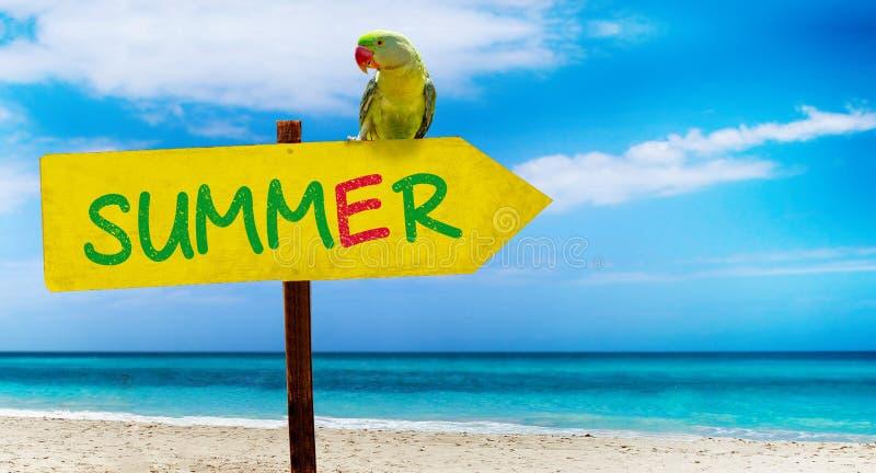 Holzschild auf schönem Strand und klarem Seeesprittextsommer Ein grüner Papagei sitzt auf einem Zeiger zu einem tropischen Paradi lizenzfreie stockfotografie