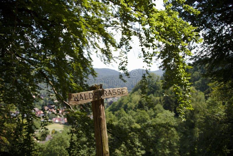 Holzschild im Wald an einem sonnigen Sommertag stockfotos