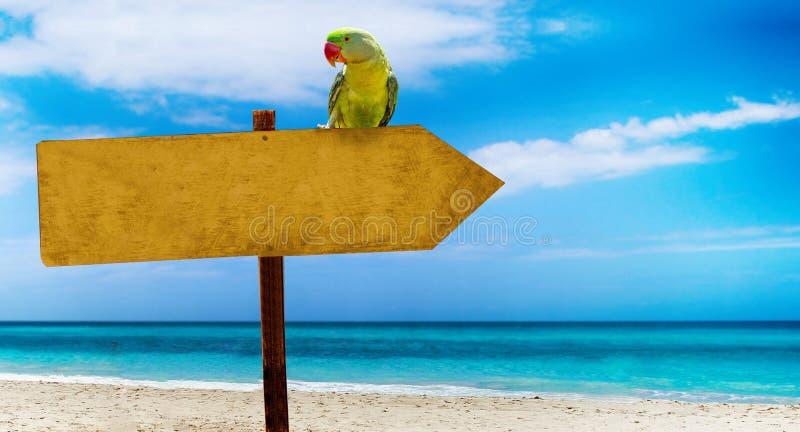 Holzschild mit leerem Platz für Ihren Text auf einem schönen Strand und einem klaren Meer Ein grüner Papagei sitzt auf einem Zeig stockbild