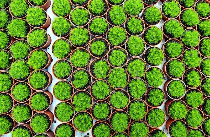 Holzschuhbeschaffenheit der kleinen Kaktuspflanze stockbild