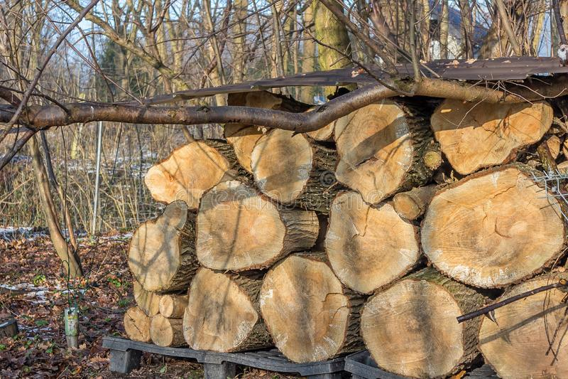 Holzstapel des alten Weidenbaums als Winterbrennstoff lizenzfreie stockbilder