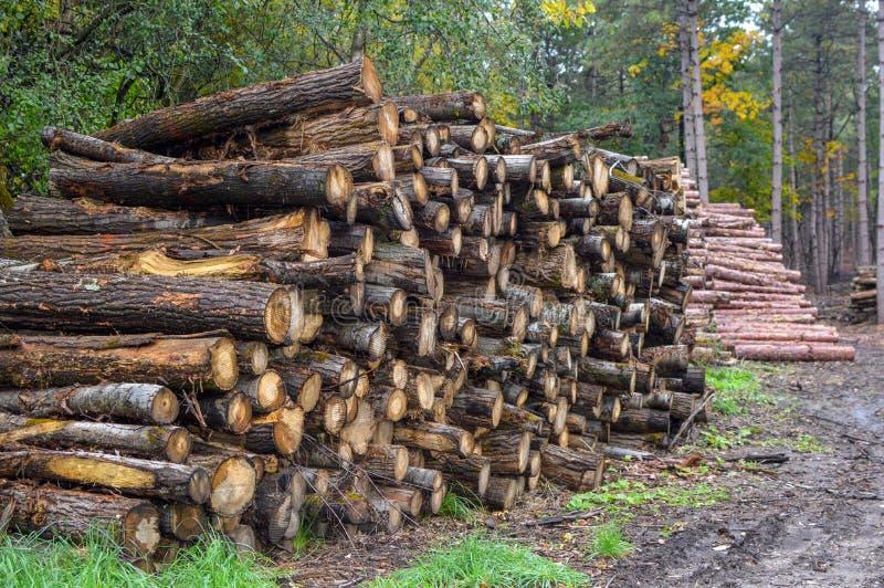 Holzstapel im Wald - Protokollierungsfirma lizenzfreie stockbilder