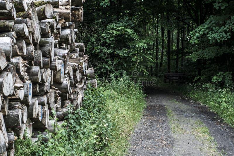 Holzstapelstapelwaldweisenpfützen-Landschaftshintergrund der hölzernen Bahnschlammstraße nicht für den Straßenverkehr lizenzfreie stockfotografie