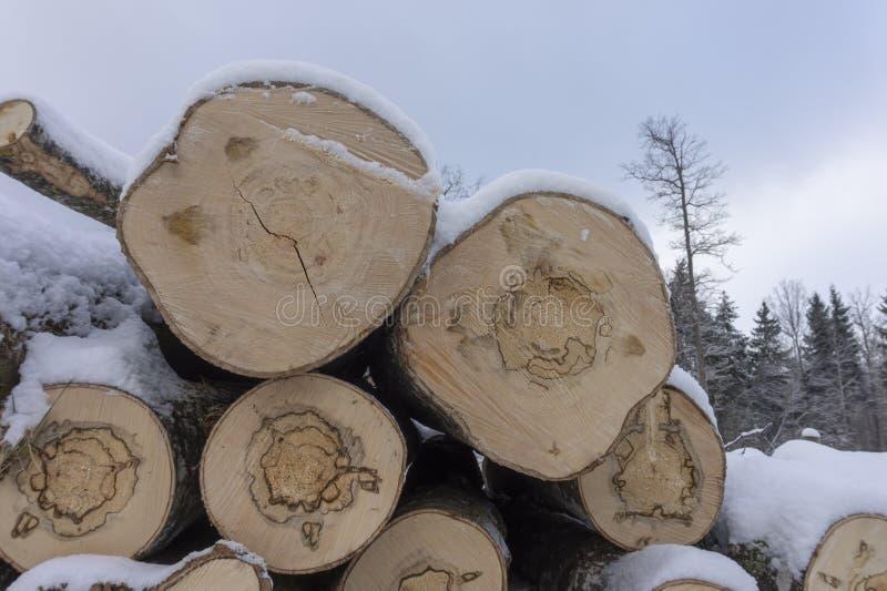 Holzstoß bedeckt in einer Schicht frischem Schnee lizenzfreie stockfotos