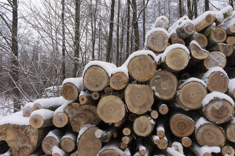 Holzstoß bedeckt in einer Schicht frischem Schnee lizenzfreie stockfotografie