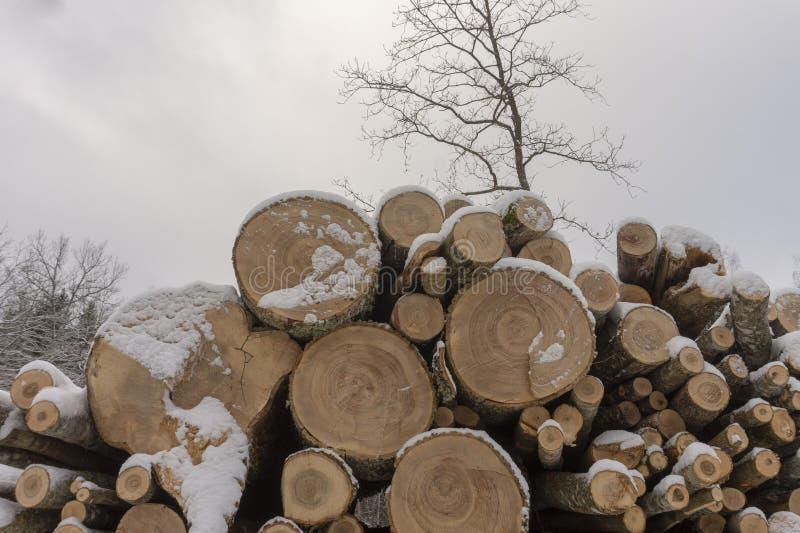 Holzstoß bedeckt in einer Schicht frischem Schnee stockfoto