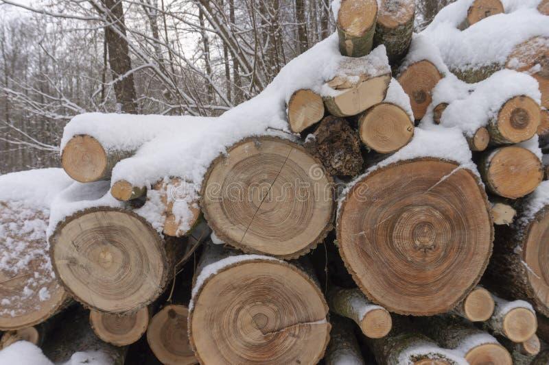 Holzstoß bedeckt in einer Schicht frischem Schnee stockbild