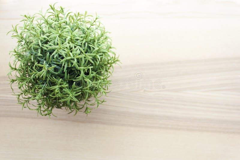Holztischspitze mit kleiner Grünpflanze in den Töpfen stockfoto