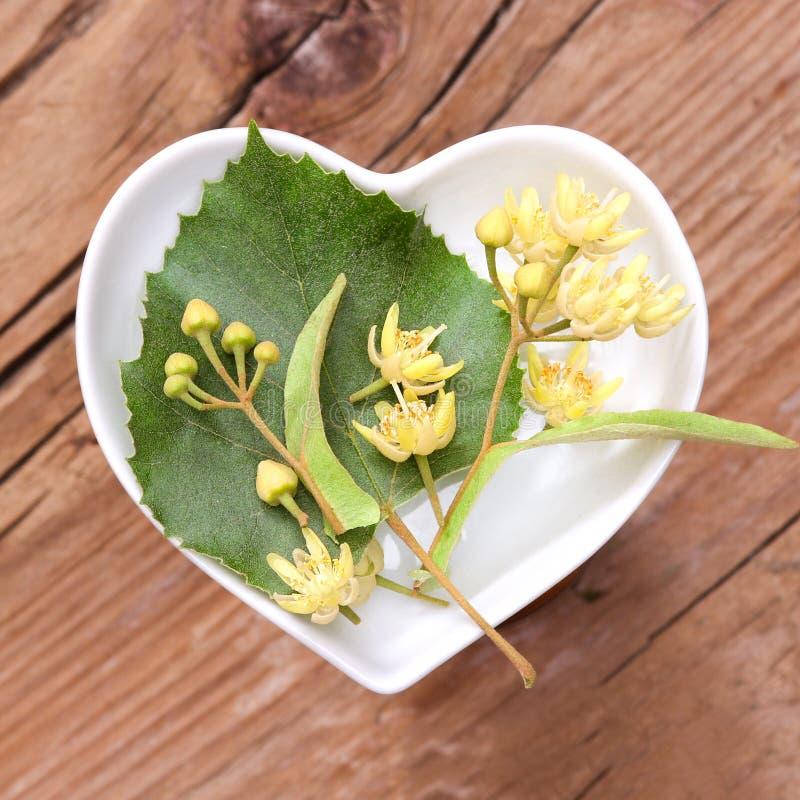 Homöopathie und Kochen mit Limettenbaumblüten stockbild