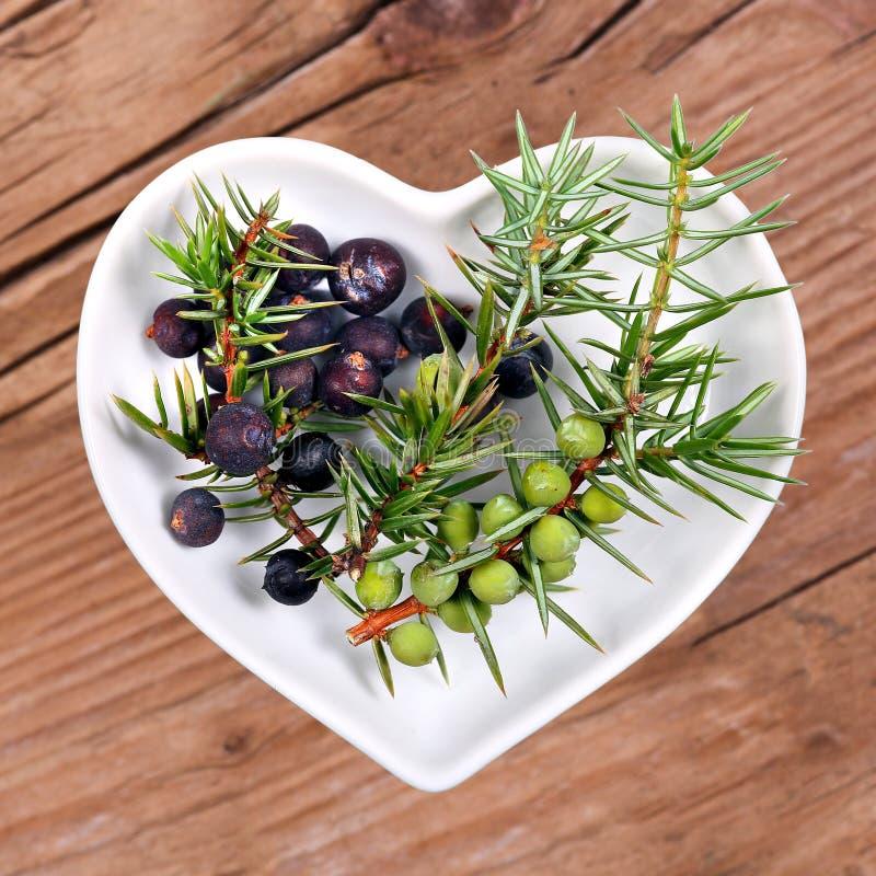 Homöopathie und Kochen mit Wacholderbusch stockfoto