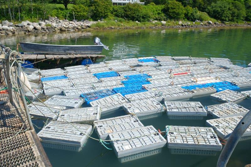 Homar klatki wypełniać z homarem fotografia stock