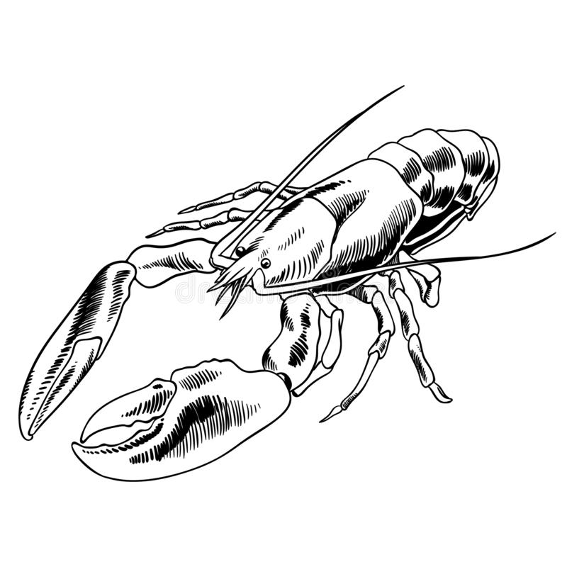 Homara owoce morza wektoru ilustracja ilustracja wektor
