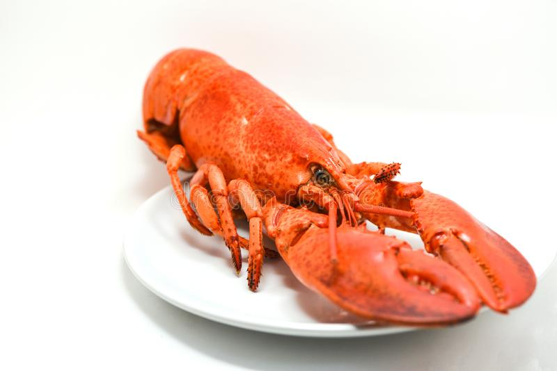 Homard du plat d'isolement sur le blanc photo libre de droits