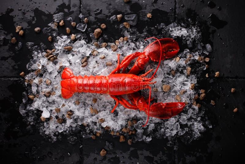 homard rouge frais images stock