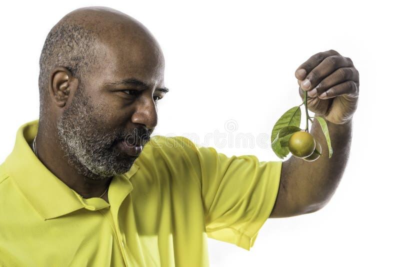 Hombre afroamericano que mira las frutas anaranjadas en una ramita con las hojas verdes aisladas en el fondo blanco imagenes de archivo