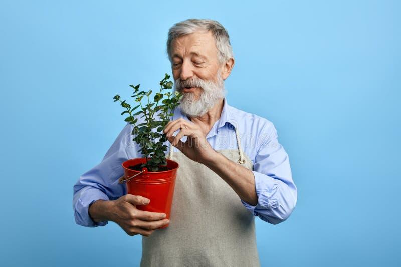 Hombre barbudo joven, vestido en camisa azul y el delantal gris que toman el cuidado de flores fotos de archivo