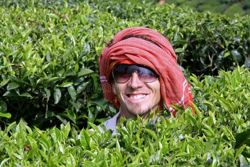 Hombre caucásico en la plantación de té, Kerala foto de archivo libre de regalías