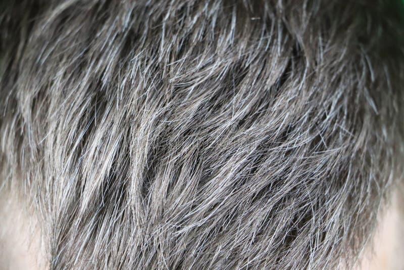 Hombre caucásico hermoso maduro con el pelo gris fotos de archivo libres de regalías