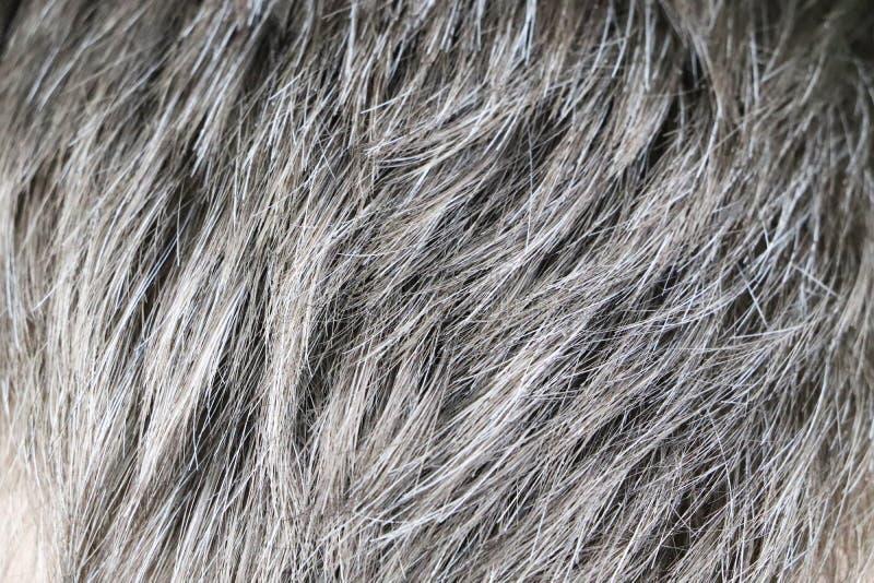 Hombre caucásico hermoso maduro con el pelo gris imagen de archivo