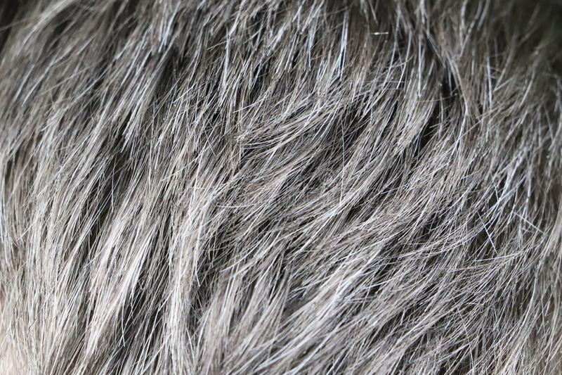 Hombre caucásico hermoso maduro con el pelo gris imagenes de archivo
