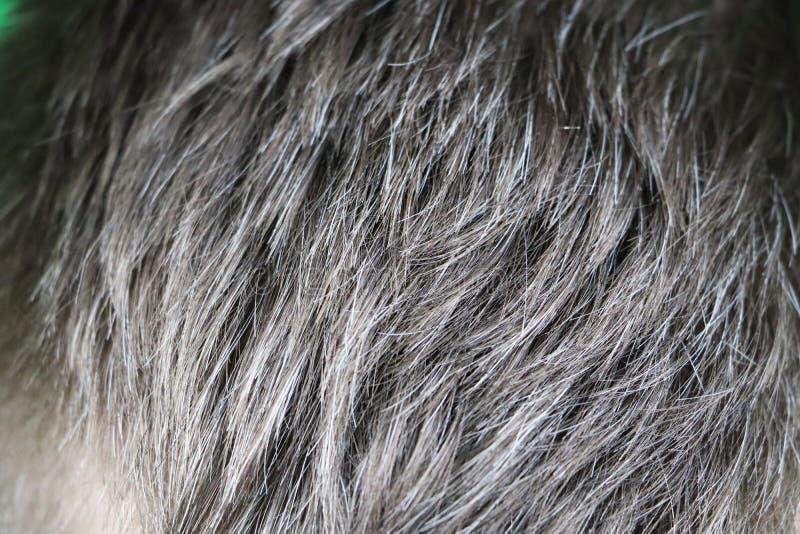 Hombre caucásico hermoso maduro con el pelo gris fotografía de archivo libre de regalías