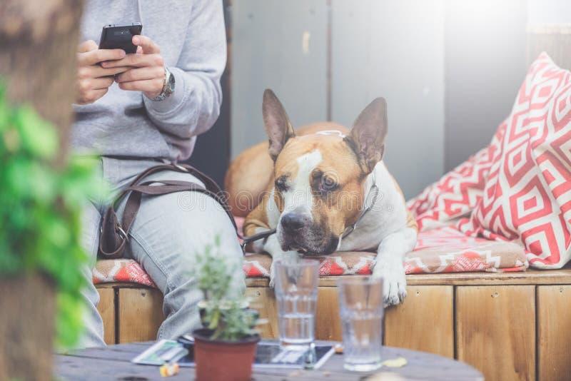 Hombre con el teléfono móvil que goza en café al aire libre con su animal doméstico del perro fotos de archivo