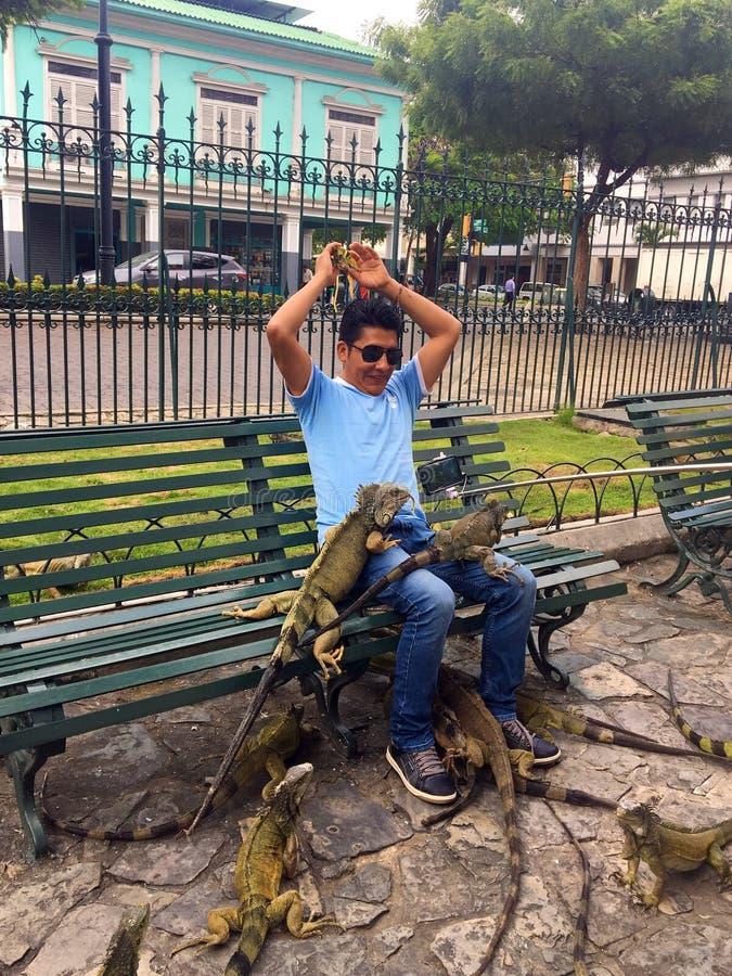 Hombre con las iguanas en el parque de Seminario, Guayaquil Ecuador foto de archivo libre de regalías