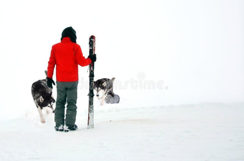 Hombre con los perros esquimales fotografía de archivo