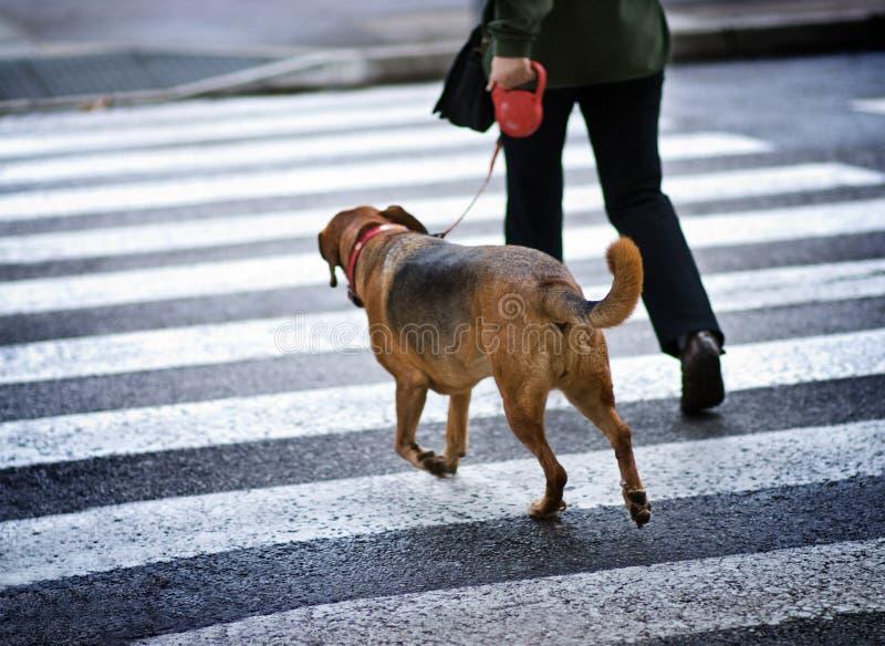 Hombre con un perro fotos de archivo libres de regalías