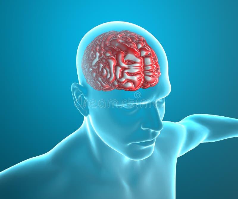 Hombre de la cabeza de la anatomía del cerebro, radiografía stock de ilustración