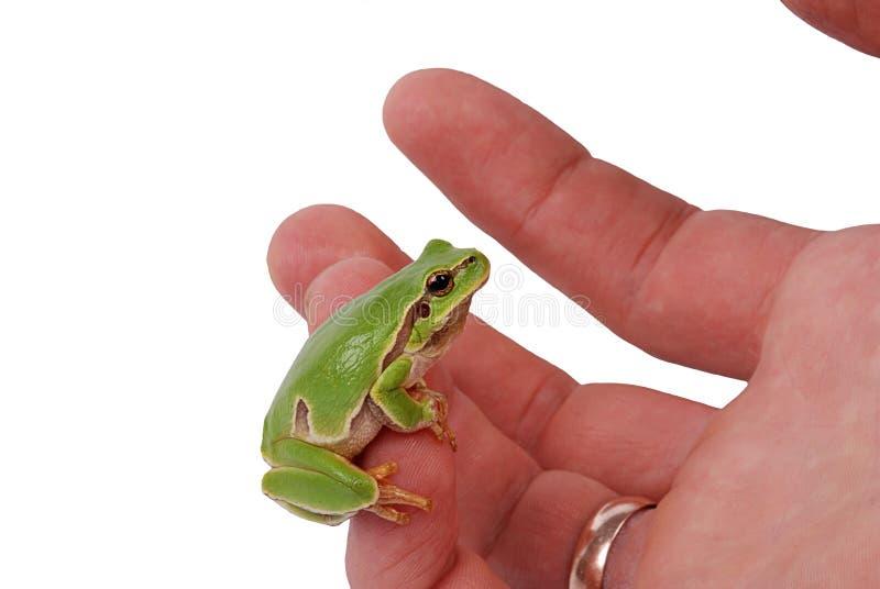Hombre de la rana a mano imagen de archivo libre de regalías
