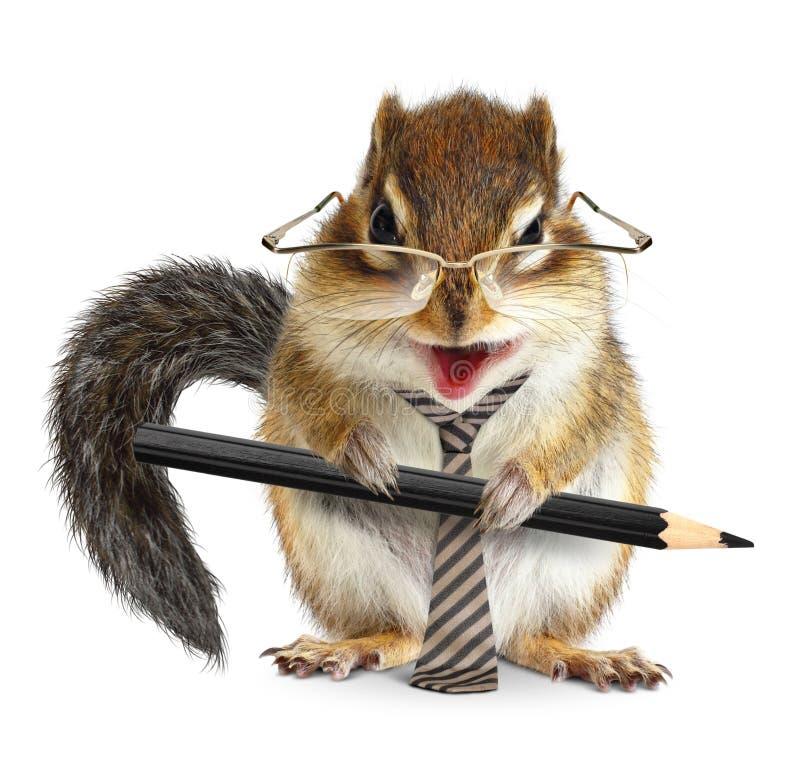 Hombre de negocios animal divertido, ardilla listada con el lazo y lápiz imagenes de archivo