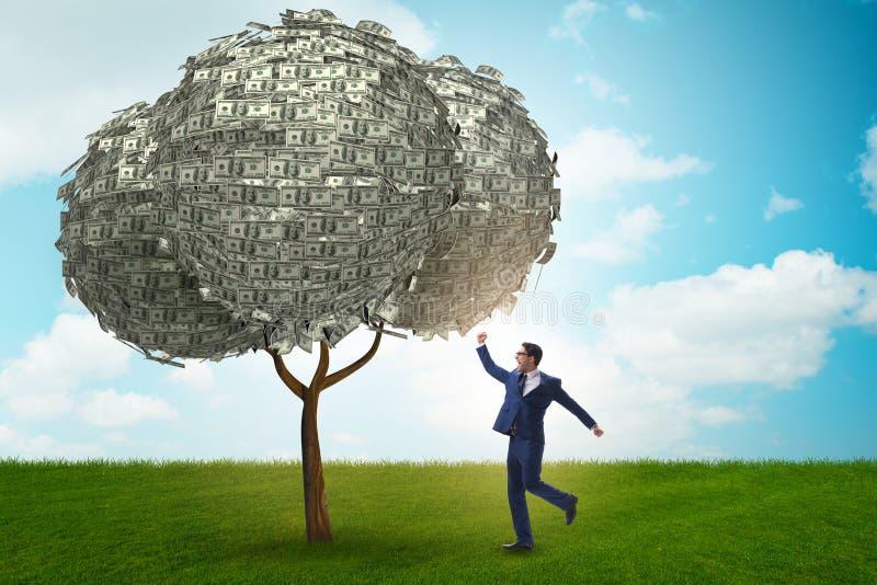 Hombre de negocios con el árbol del dinero en concepto del negocio imagen de archivo libre de regalías