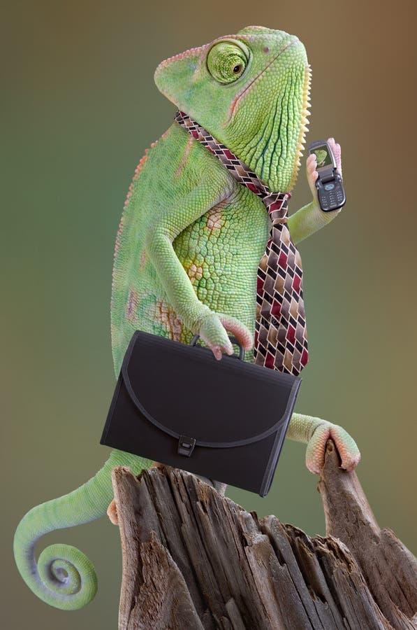 Hombre de negocios del camaleón imagen de archivo libre de regalías