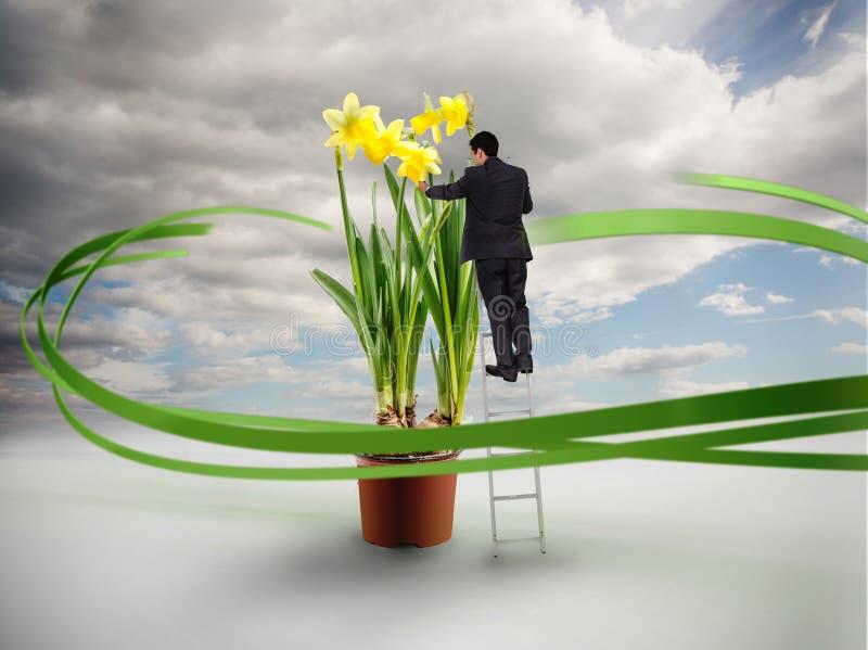 Hombre de negocios en la escalera que toca narcisos gigantes libre illustration
